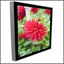 Premier Single Sided Graphic Light Boxes